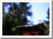 Spider, Ornö, Sóderviken, Stockholm