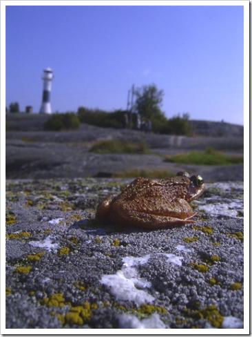 frog de Huvudskar, Sweden