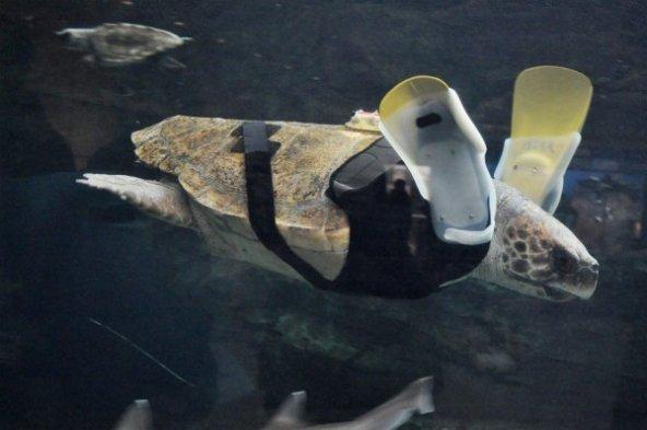 Deniz kaplumbağası Yu Chan