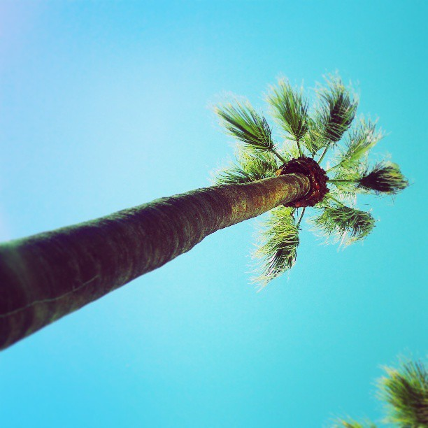 Keleş Palmiye (photo)